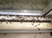 another picture of termite swarm