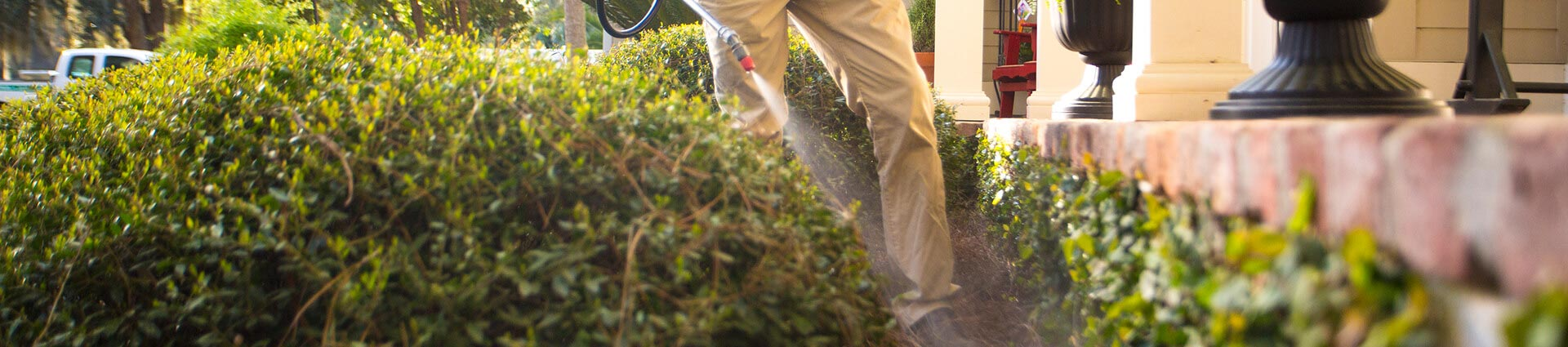 StateWide Termite & Pest Control can spray to kill unwanted pests.
